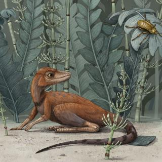 Fossils Show Small Forerunner to Dinosaurs That Fed on Bugs