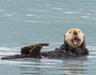 Ancient Teeth May Have Solved a Sea Otter Mystery
