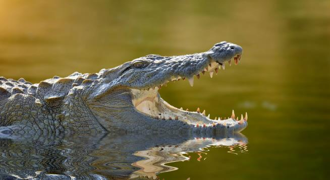 Guy's Swim Interrupted by 'Sudden Impact' With a Crocodile