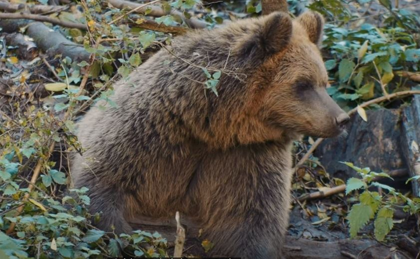 You Know Polar Bears, Grizzly Bears. Now Meet the 'Pizzly' - Newser