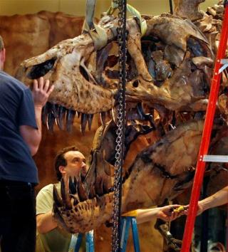 Sore Throat May Have Axed T Rex