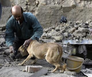 Miracle Dog, Owner Survive Iraqi Blast