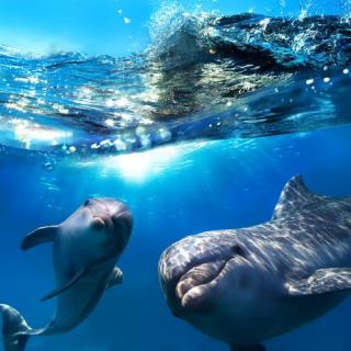Dolphins Have Names for Each Other