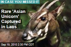 Endangered Species: Rare Saola, or 'Asian Unicorn,' Dies After Being Captured in Laos