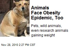 Animals Face Obesity Epidemic, Too