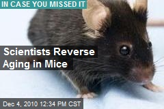 Scientists Reverse Aging in Mice