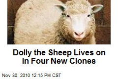 Dolly the Sheep Lives on in Four New Clones