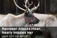 Reindeer Attacks Hiker