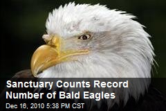 Sanctuary Counts Record Number of Bald Eagles