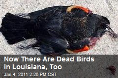 Now There Are Dead Birds in Louisiana, Too