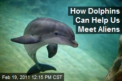 How Dolphins Can Help Us Meet Aliens