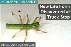 New Life Form Discovered at Truck Stop