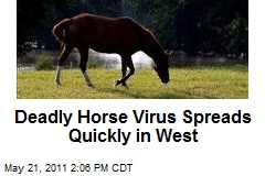 Deadly Horse Virus Spreads Quickly in West