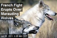 French Row Erupts Over Marauding Wolves