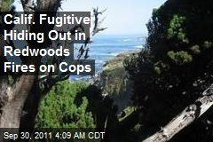 Calif. Fugitive Hiding Out in Redwoods Fires on Cops