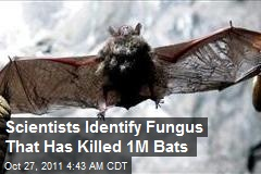 Scientists Identify Fungus That Has Killed 1M Bats