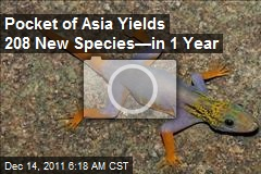 Pocket of Asia Yields 208 New Species—in 1 Year