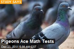 Pigeons Ace Math Tests