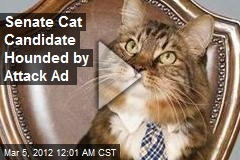 Senate Cat Candidate Hounded by Attack Ad