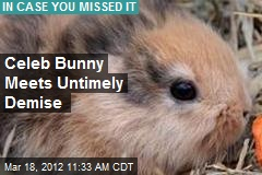Celeb Bunny Meets Untimely Demise