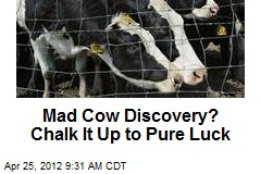 Mad Cow Discovery? Chalk It Up to Pure Luck