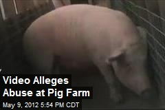 Video Alleges Abuse at Pig Farm