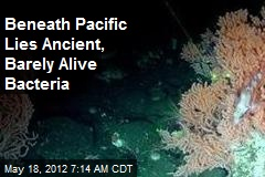 Beneath Pacific Lies Ancient, Barely Alive Bacteria