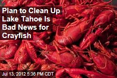 Plan to Clean Up Lake Tahoe Is Bad News for Crayfish