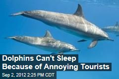 Dolphins Can't Sleep Because of Annoying Tourists