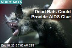 Bat Die-Off Offers Clues in AIDS Fight