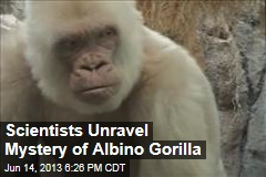 Scientists Unravel Mystery of Albino Gorilla