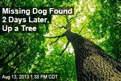 Missing Dog Found 2 Days Later, Up a Tree