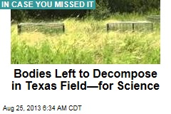 Bodies Left to Decompose in Texas Field—for Science