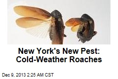 New York Newcomer: Cold-Weather Roaches