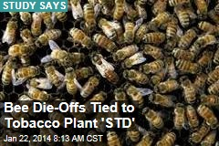 Bee Die-Offs Tied to Tobacco Plant 'STD'