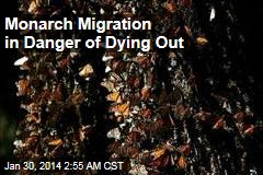Monarch Migration in Danger of Dying Out