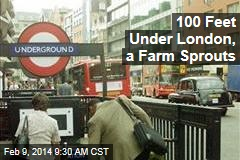 Under London's Underground, a Farm Sprouts