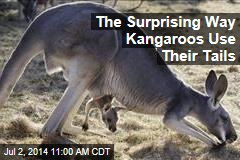 The Surprising Way Kangaroos Use Their Tails