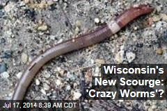 Wisconsin's New Scourge: 'Crazy Worms'?