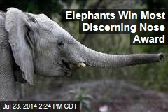 Elephants Win Most Discerning Nose Award