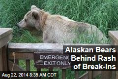 Alaskan Bears Behind Rash of Break-Ins