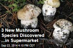 3 New Mushroom Species Found in Supermarket