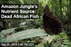Amazon Jungle's Nutrient Source: Dead African Fish