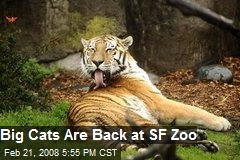 Big Cats Are Back at SF Zoo