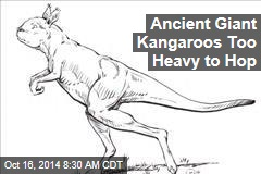 Ancient Giant Kangaroos Too Heavy to Hop