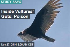 Inside Vultures' Guts: Poison