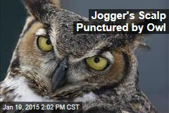 Jogger Attacked by Owl