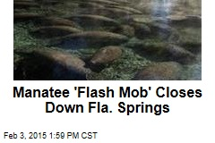 Manatee 'Flash Mob' Closes Down Fla. Springs