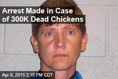 Arrest Made in Case of 300K Dead Chickens