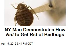 How Not to Get Rid of Bedbugs